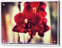 Acrylic Print featuring the photograph Orchid Alone by Isabella F Abbie Shores FRSA