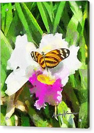 Orchid And Butterfly Acrylic Print by Anthony Caruso
