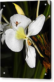 Orchid And Friend Acrylic Print