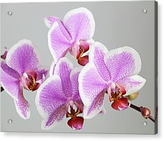 Orchid Array Acrylic Print
