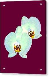 Orchid Art 5 Purple Zurich 2000 Jgibney The Museum Zazzle Gifts Acrylic Print by jGibney