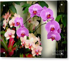 Acrylic Print featuring the photograph Orchid Beauties by Sue Melvin