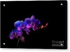 Acrylic Print featuring the photograph Orchid by Brian Jones