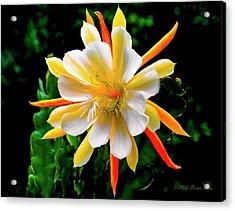 Orchid Cactus Epiphyllum Acrylic Print