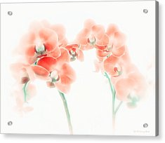 Orchid Collection 'soft Red' Acrylic Print