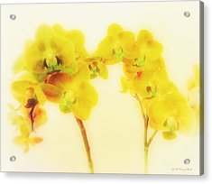 Orchid Collection 'summer' Acrylic Print