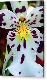 Orchid Cross Acrylic Print