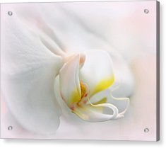Orchid Curves Acrylic Print by Jessica Jenney