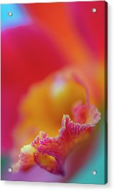 Orchid Detail Acrylic Print