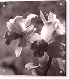 Acrylic Print featuring the photograph Orchid Dream - Square by Kerri Ligatich