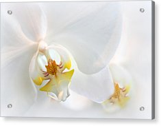 Orchid Echo Acrylic Print by Jessica Jenney