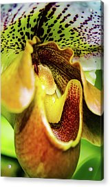 Orchid Faces Acrylic Print