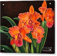 Orchid Fever 4 Volcano Queen 1 Acrylic Print