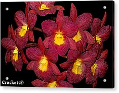 Orchid Floral Arrangement Acrylic Print
