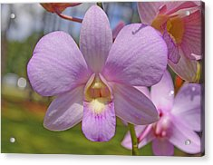 Orchid Flower Acrylic Print by Kenneth Albin