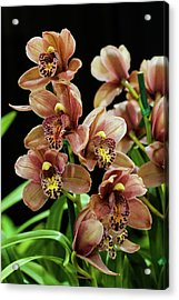 Acrylic Print featuring the photograph Orchid Flowers  by Catherine Lau