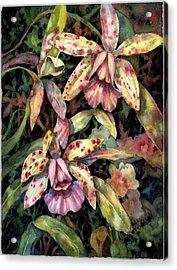 Orchid Garden Acrylic Print by Ann  Nicholson