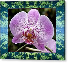 Acrylic Print featuring the photograph Orchid Goodness by Bell And Todd