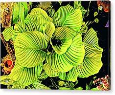 Orchid Green Fade Aloha  Acrylic Print