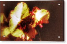 Acrylic Print featuring the photograph Orchid by Isabella F Abbie Shores FRSA