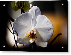 Orchid Acrylic Print by John Ater