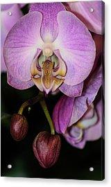 Orchid Life Acrylic Print