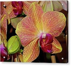 Orchid Acrylic Print by Lynda Lehmann