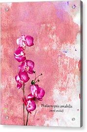 Orchid Acrylic Print by Mark Rogan