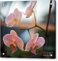 Orchid Menage Acrylic Print by Mike Reid