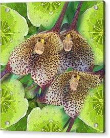 Orchid Monkeys Acrylic Print