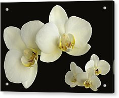 Orchid Montage Acrylic Print by Hazy Apple