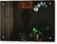 Orchid Morning Acrylic Print by Paul Green