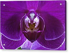 Orchid No. 1 Acrylic Print by Harry H Hicklin