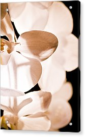 Orchid Acrylic Print by Nora Batternay