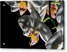 Orchid On Fire Acrylic Print
