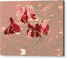 Orchid Petals In Pink Acrylic Print by Irma BACKELANT GALLERIES