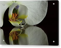 Orchid Reflected Acrylic Print