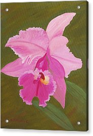 Orchid Acrylic Print by Ruth  Housley