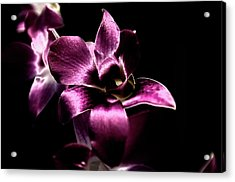 Acrylic Print featuring the photograph Orchid by Sheryl Thomas