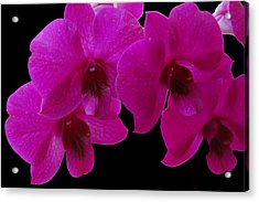 Orchid Song Acrylic Print