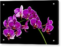Orchid Splendor Acrylic Print by Robert  McCord