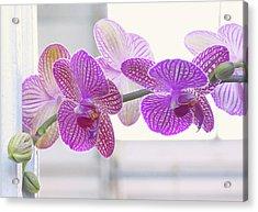 Orchid Spray Acrylic Print