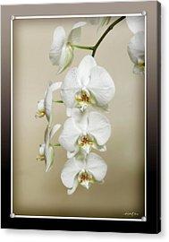Orchid Spray Acrylic Print by Linda Olsen