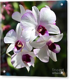 Orchid Square 2 Acrylic Print by Carol Groenen