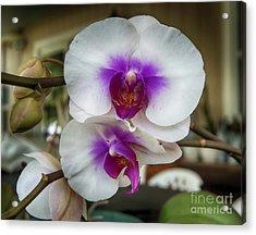 Orchid Stems Acrylic Print by Judy Hall-Folde