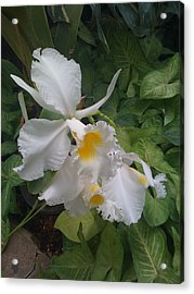 Acrylic Print featuring the photograph orchid VIII by Fanny Diaz