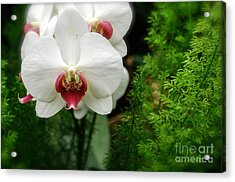 Orchid White Acrylic Print by Brian Jones