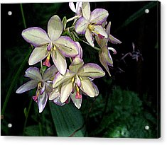 Orchidaceae Acrylic Print by Don  Wright