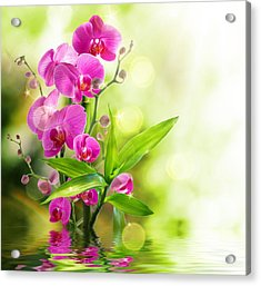 Orchidaceae Acrylic Print