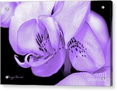 Orchid...orchid.... Acrylic Print